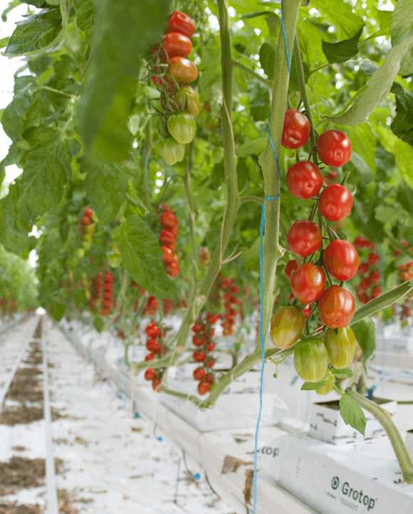 Rainbow Growers reduces GB carbon emissions while generating substantial revenue